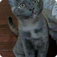 Adopt A Pet :: Katie - Reston, VA