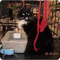Adopt A Pet :: Houdini (Linus) - Riverside, RI