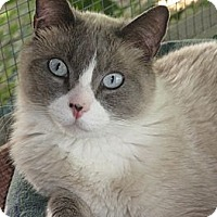 Adopt A Pet :: CUPID - Brea, CA