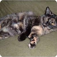 Adopt A Pet :: Consuela - Troy, OH