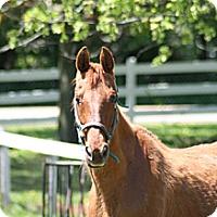 Adopt A Pet :: Bonnie - Woodstock, IL
