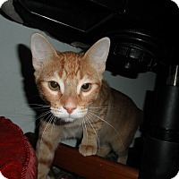 Adopt A Pet :: Brad - Milwaukee, WI