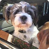 Adopt A Pet :: One-eyed Jack - Atlanta, GA
