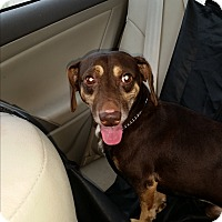 Adopt A Pet :: Max - Pinellas Park, FL