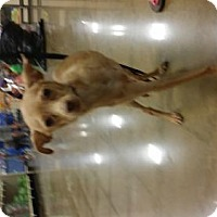 Adopt A Pet :: Benny - Edmond, OK