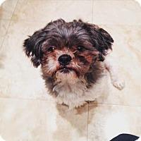Adopt A Pet :: BRETT-pending - Eden Prairie, MN