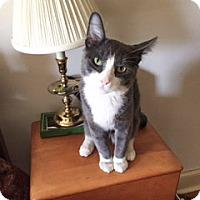 Adopt A Pet :: Grayson - Albany, NY