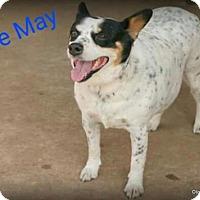 Australian Cattle Dog Mix Dog for adoption in Wagoner, Oklahoma - Ellie Mae