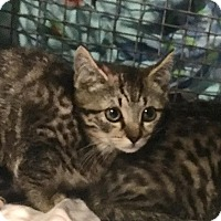 Adopt A Pet :: Cinna - East Brunswick, NJ