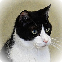 Adopt A Pet :: Luther - Pineville, NC