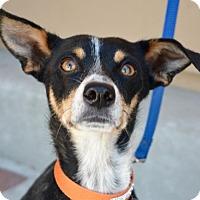 Adopt A Pet :: Dixie - Sunnyvale, CA