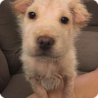 Adopt A Pet :: Klondike - Houston, TX