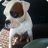 Adopt A Pet :: Petey - Jacksonville, AL