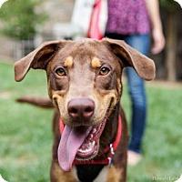 Adopt A Pet :: Ace - Washington, DC