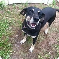 Adopt A Pet :: Lady - Myakka City, FL