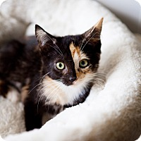 Adopt A Pet :: Gemini - Jacksonville, FL