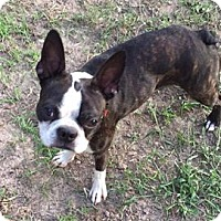 Adopt A Pet :: Colby - Van Vleck, TX