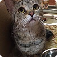 Adopt A Pet :: Italia - Morganton, NC