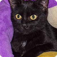 Adopt A Pet :: Anya - Elmwood Park, NJ
