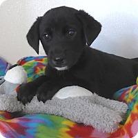 Adopt A Pet :: Thunder - Manning, SC