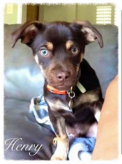 Terrier (Unknown Type, Medium) Mix Dog for adoption in Fresno, California - Henry