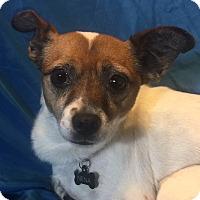Adopt A Pet :: Nena (Special Needs) - San Leandro, CA