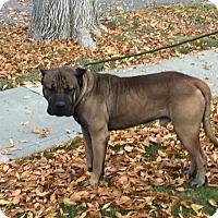 Adopt A Pet :: TINY - Gustine, CA