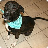 Adopt A Pet :: Tigga - Pilot Point, TX