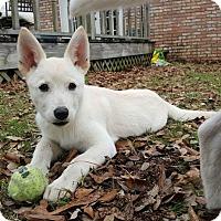 Adopt A Pet :: Nikkita - Flemington, NJ