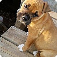 Adopt A Pet :: King - Wichita Falls, TX