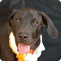 Adopt A Pet :: Knight - Plano, TX