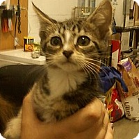 Adopt A Pet :: Reeses - Troy, OH
