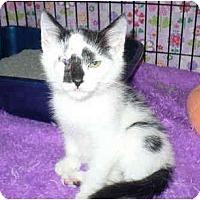 Adopt A Pet :: Little Slugger - Colmar, PA