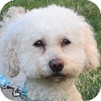 Adopt A Pet :: Ellie - La Costa, CA