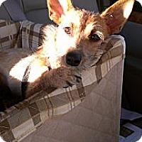 Adopt A Pet :: Rikki - Santa Monica, CA