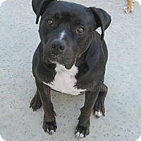 Adopt A Pet :: Kona - Carpenteria, CA