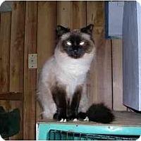 Adopt A Pet :: Meeka - Pascoag, RI