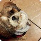 Adopt A Pet :: Tabitha