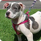 Adopt A Pet :: Birthday