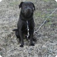 Adopt A Pet :: D A - Point, TX