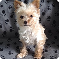 Adopt A Pet :: BeBe - Mississauga, ON