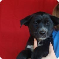 Adopt A Pet :: Howard - Oviedo, FL