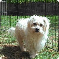 Adopt A Pet :: Skipper - Huntington Beach, CA