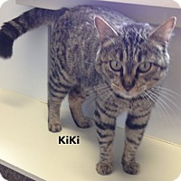 Adopt A Pet :: KiKi - Mountain View, AR