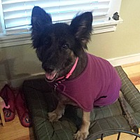 Adopt A Pet :: Xena - Roswell, GA