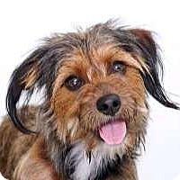 Adopt A Pet :: Margaret - Sudbury, MA