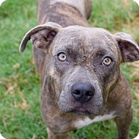 Adopt A Pet :: Magnolia - College Station, TX