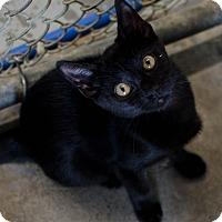 Adopt A Pet :: Belton - Greenwood, SC