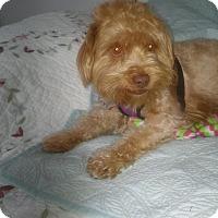 Adopt A Pet :: Loki - Gig Harbor, WA