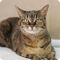 Adopt A Pet :: Missy - Midland, MI